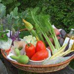 ヨーロッパでなじみがある野菜 ユーロ野菜