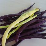 黄・紫いんげん